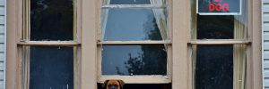 Dog sitting in sash window